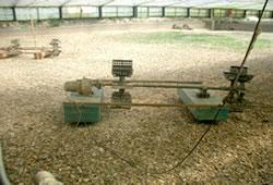 うなぎの土壌