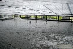 うなぎの池